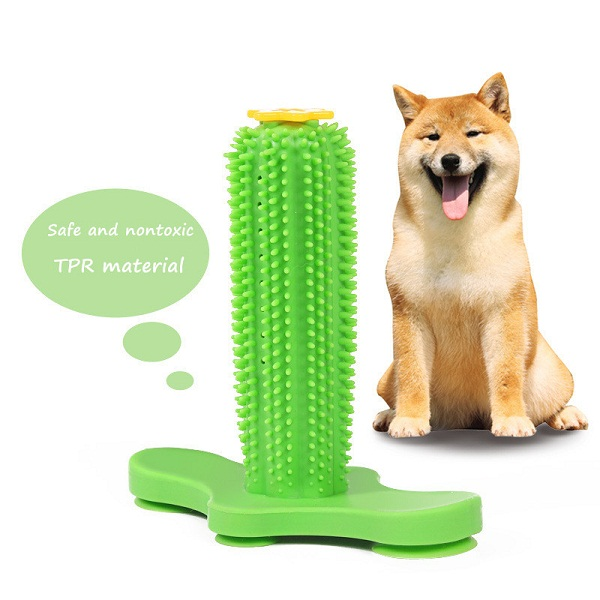 Here you can get the best for your pet Cacatus toothbrush for dogs
