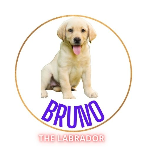 Most Familiar Labrador Retriever dog breed - My Bruno Labrador