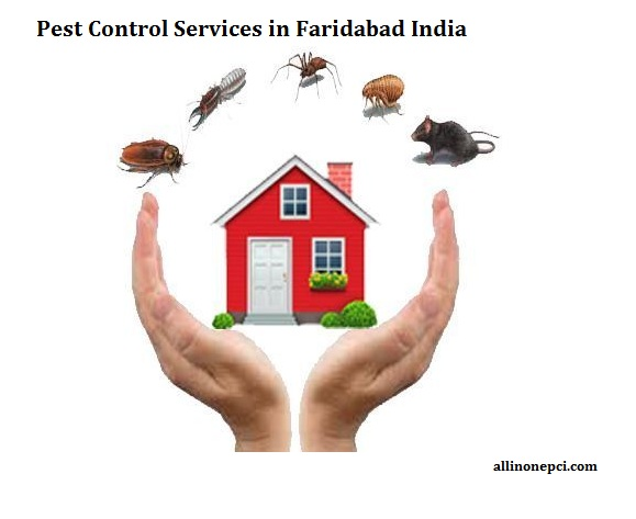 Looking for the best pest control services in Faridabad India