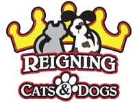 Are you looking for the best kennel services for your paw pet?