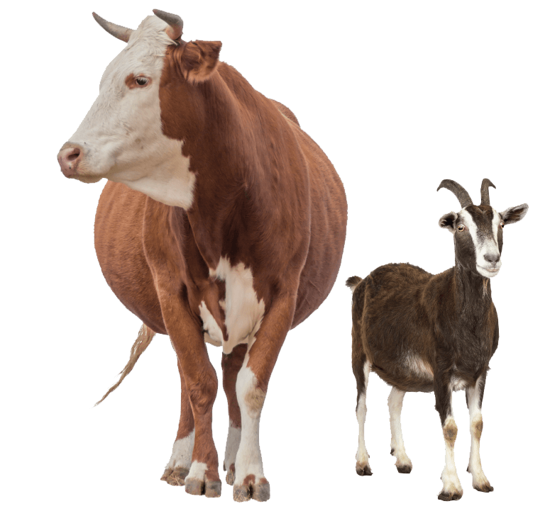 Livestock Feed Supplements