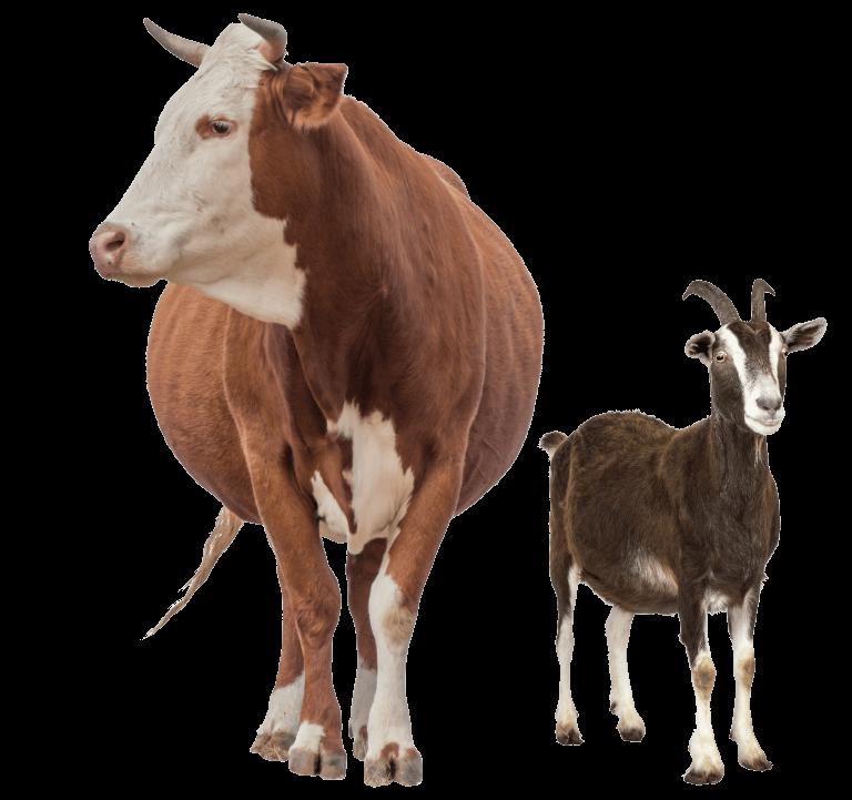 Livestock Feed Supplements